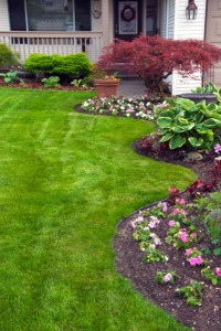 Affordable hydroseeding is a professional landscaper in for Affordable garden services